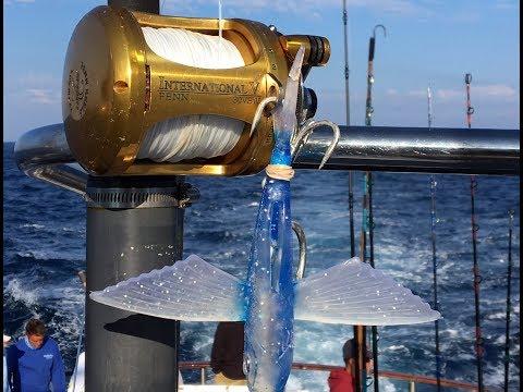 Big Bluefin Kite Fishing The Yummy
