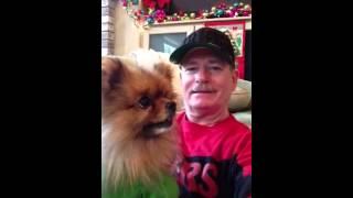 Pomeranian Christmas Kisses