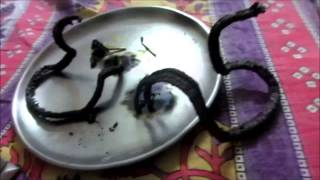 Make Snake From Fire - Experiment