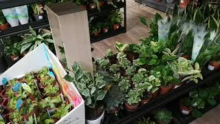 Great house plant haul pothos ferns monstera pepperomia and more wow