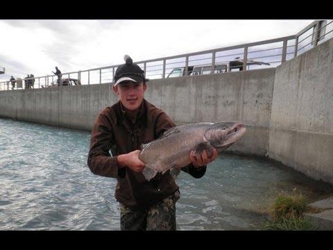 Salmon Fishing Twizel Canals 10lb  YouTube