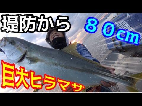 【衝撃】堤防からまさかの巨大ヒラマサが釣れた!!