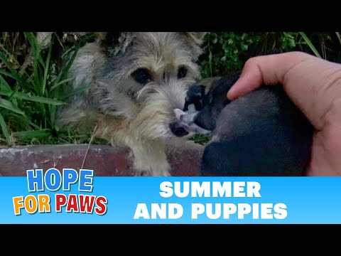 Watch how this stray mom reacted when Hope For Paws reached out for her puppies.