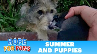 Watch how this stray mom reacted when Hope For Paws reached out for her puppies. thumbnail