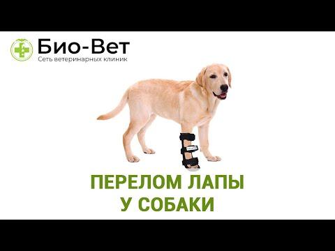 Вопрос: Как помочь собаке восстановиться после перелома лапы?