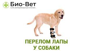 Перелом лапы у собаки. Ветеринарная клиника Био-Вет.