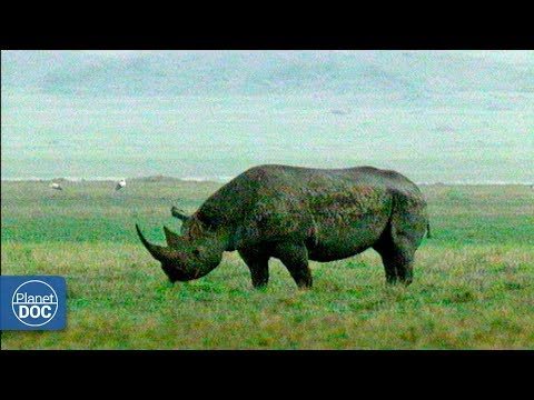 Vida salvaje del Ngorongoro. Tanzania - Parte 1