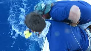 2018 Bisbee's Black & Blue Marlin Tournament | FANTASMA | Blue Marlin