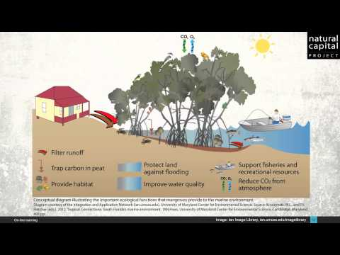 Natural Capital & Ecosystem Services