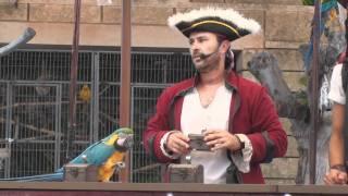 Parrot Show Mallorca 2010