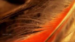 A Warm Place (Stella Soleil Mix) - Nine Inch Nails
