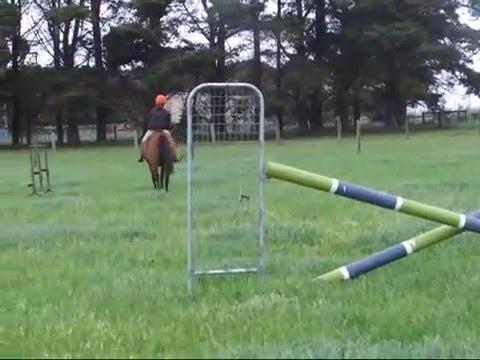 Electra-Horse For Sale, Melbourne Victoria