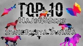NAJDROŻSZE ZWIERZĘTA ŚWIATA - TOP 10
