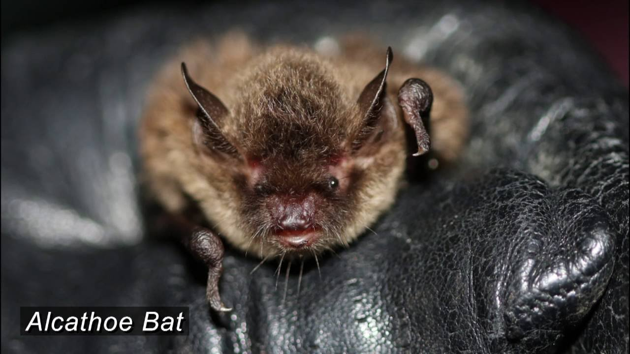 a celebration of british bats youtube