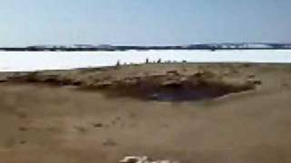 охота на гуся весна 2008