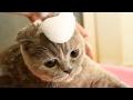 猫は愛撫やお風呂と話します