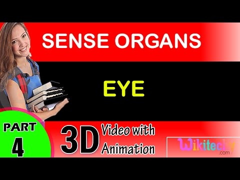 Eye Sense Organs class 12 11 10 9 8 7 6 cbse neet exam tips preparation lectures videos