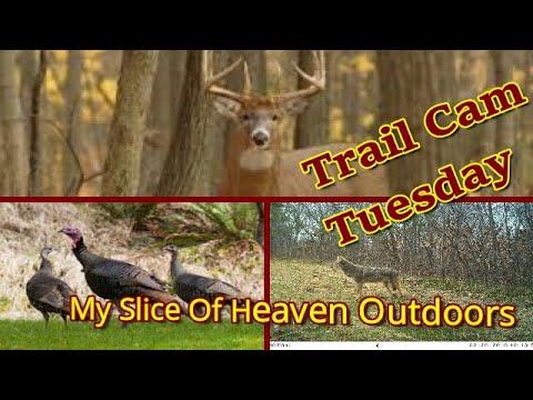 trail cam pics 2020