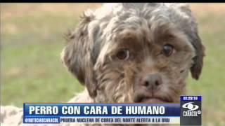 El perro con cara de humano sigue a la espera de quién lo adopte - 12 de febrero 2013
