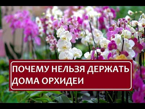 Вопрос: Почему нельзя держать дома орхидеи?
