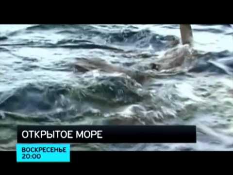 Лучшие фильмы ужасов про акул