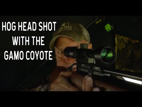 Hog Hunting with the Gamo Coyote