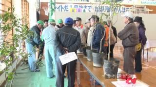 【沖縄】大宜味村産業まつり 2014.1.18—19