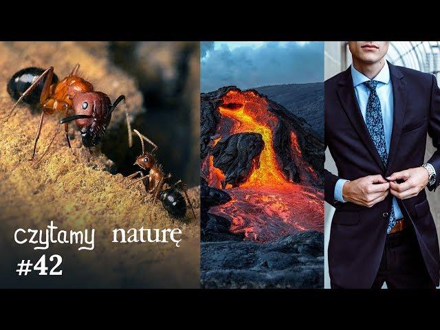 Czytamy naturę #42 | Mrówki rysowane w Paincie - Wielka kula magmy - Ubierz się mądrze