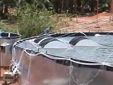 Fabrica de peixe iii youtube for Fabrica de aberturas de aluminio