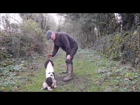 Retrieving issues with gundog pup.