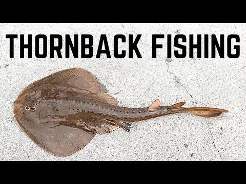 How To Catch THORNBACKS | Huntington Beach Pier (FREE PARKING REVEALED)