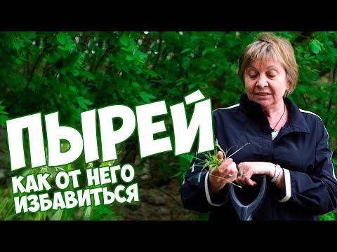 ПЫРЕЙ ✅ Как избавиться от травы пырей ?🌱 сад и огород🌱