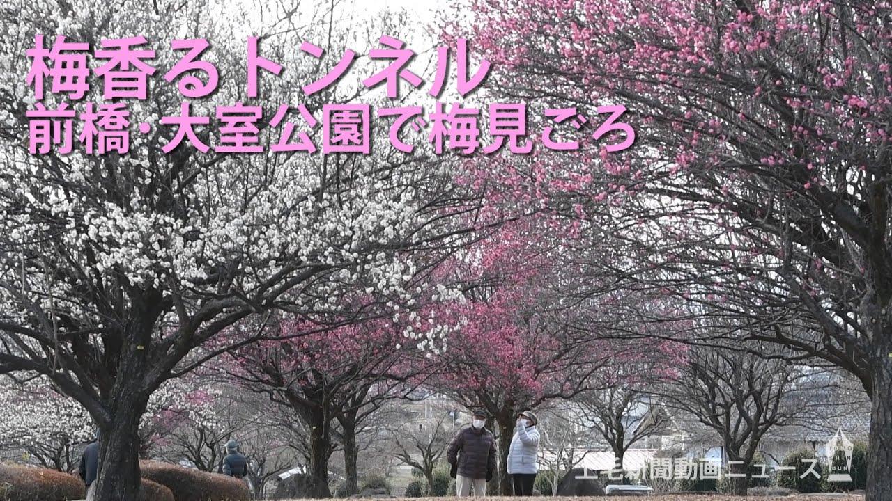室 公園 大 嘟嘟雞比: 【日本東京、伊豆半島半自駕遊(Day2)】伊東市