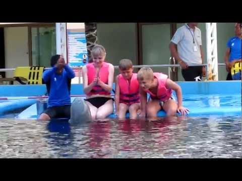 Pattaya Dolphin World Show