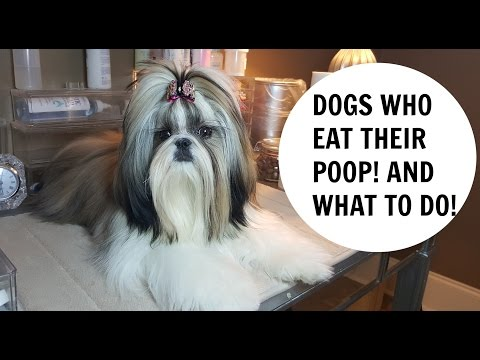 HOW TO STOP A  DOG From EATING POOP