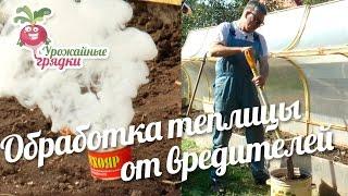 видео Паутинный клещ в теплице: меры борьбы, обработка, в том числе на огурцах