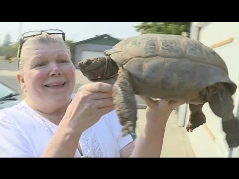 100-Year-Old Tortoise Runs Away For Sex! | What's Trending Now