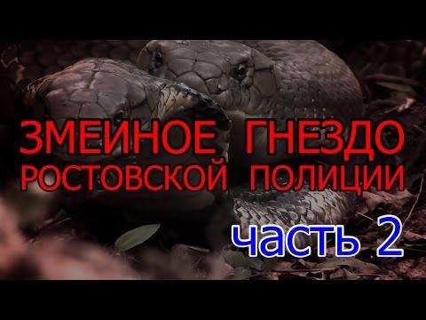 Змеиное гнездо ростовской полиции. Часть 2 | Аналитика Юга России