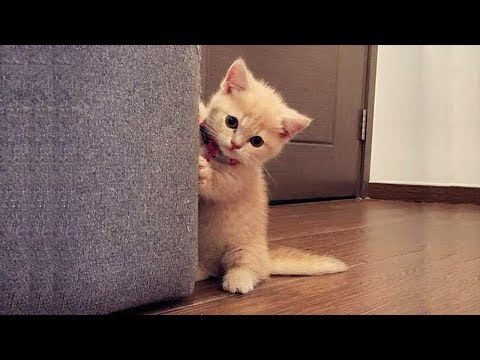 Cats just never fail to make you laugh and happiness - Funny cat compilation