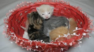 Baby Kittens In A Basket 😍