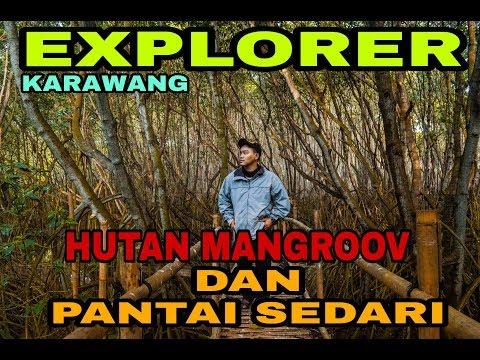 pantai-sedari-dan-hutan-mangrove-karawang-  -menelusuri-ujung-karawang-_-bermain-di-pantai-sedari