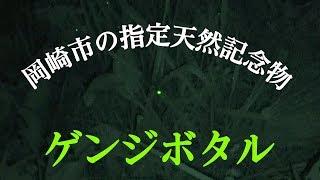 【癒し動画】生まれて初めてホタルを見た人はどんな反応するの?