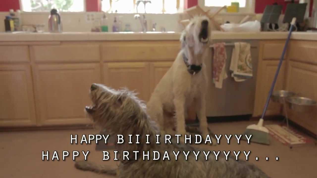 happy irish wolfhound birthday   youtube