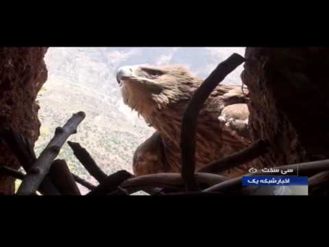 Iran SiSakht county, Dena natural protected area منطقه حفاظت شده دنا شهرستان سي سخت ايران