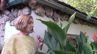 Канна тропическое растение.  Растёт у нас в саду!
