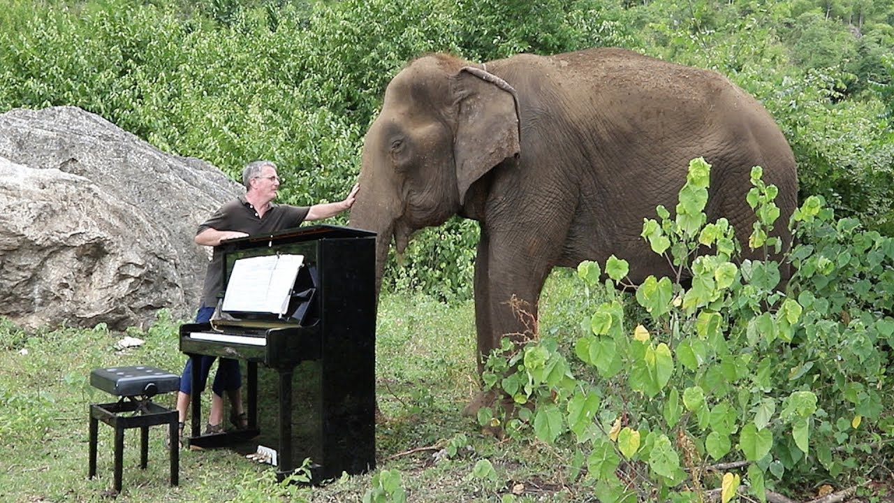Debussy Clair De Lune On Piano For 80 Year Old Elephant Youtube