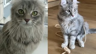AMERICAN CURL CATS ARE SO SWEET