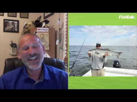 Chesapeake Schoolie Striper Bite: What's Hot & Where | LIVE With Lenny Rudow