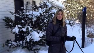 Éducateur Canin Montréal : Entraîner Un Chien à Ne Pas Tirer En Laisse | Leash Walking.