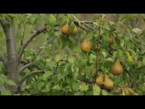 Le Verger Permaculturel   Au delà du bio vidéo campagne Kickstarter